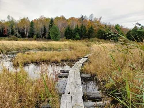 Washington Mountain Marsh at October Mountain State Forest