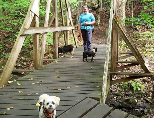 Two Bridges Trail in Ashfield