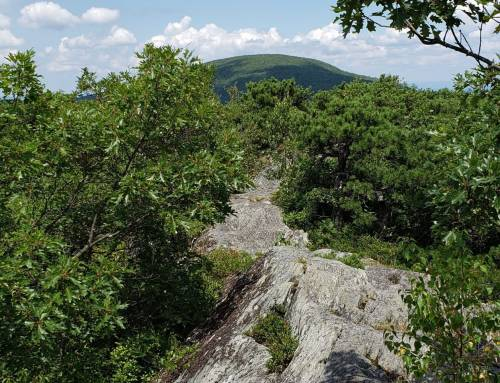 Mt. Everett State Forest Maps and Hikes