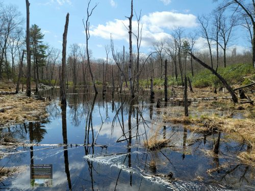 Beaver Pond at Tekoa Mountain in Montgomery