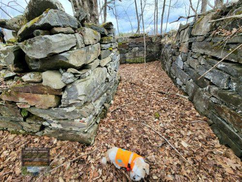 Downes Cellar Hole in Sandisfield