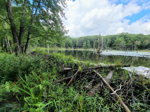Group Hike August 21st at Knittel Conservation Area Photos